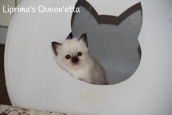 8-6-14-Queenetta_1