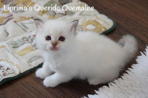 8-6-14-Quemalee_1