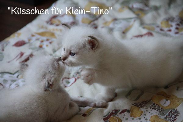 8-6-14-Tino_4