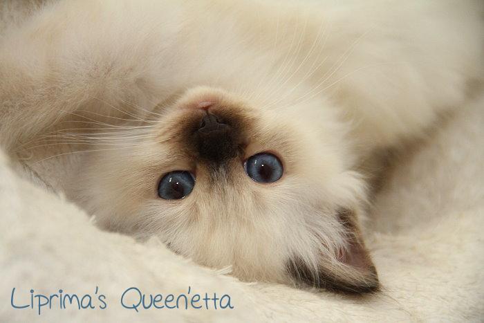 Queen'etta_8_Wochen