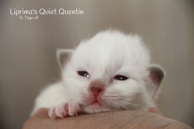 Quentin_12_Tage_alt_1
