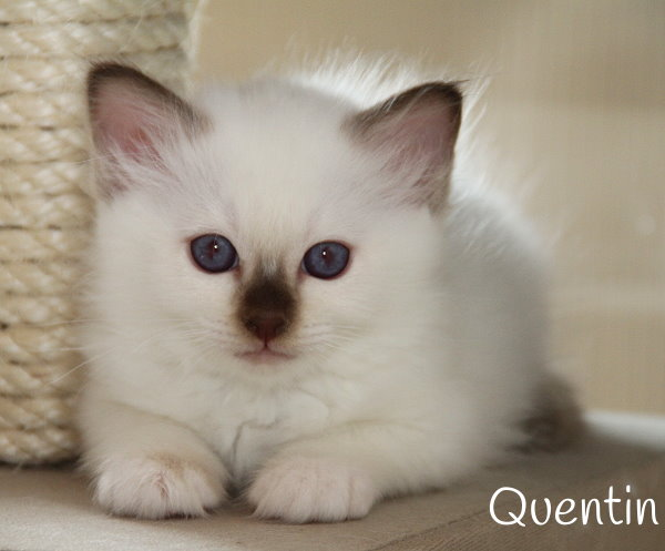 Quentin_25_6_14_1