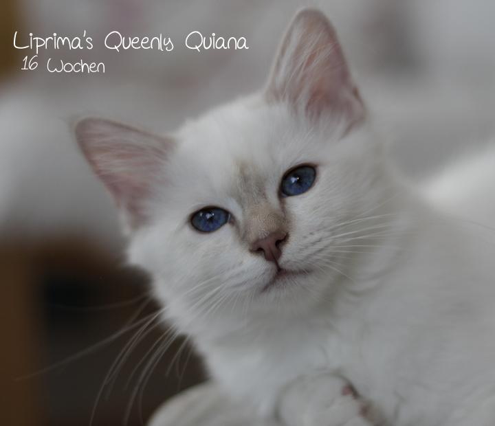 Quiana_16_Wochen_1