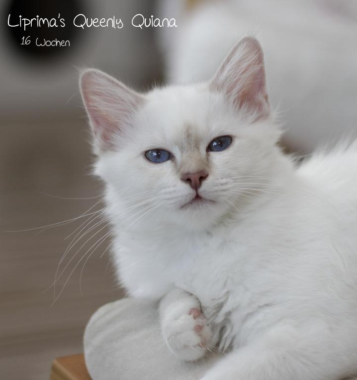 Quiana_16_wochen_2