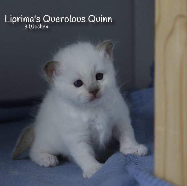 Quinn_3_Wochen