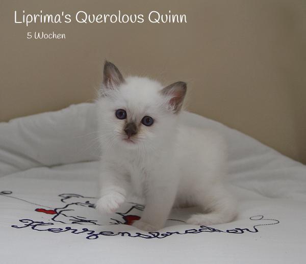 Quinn_5_Wochen_1