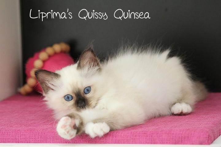 Quinsea_9_Wochen_2