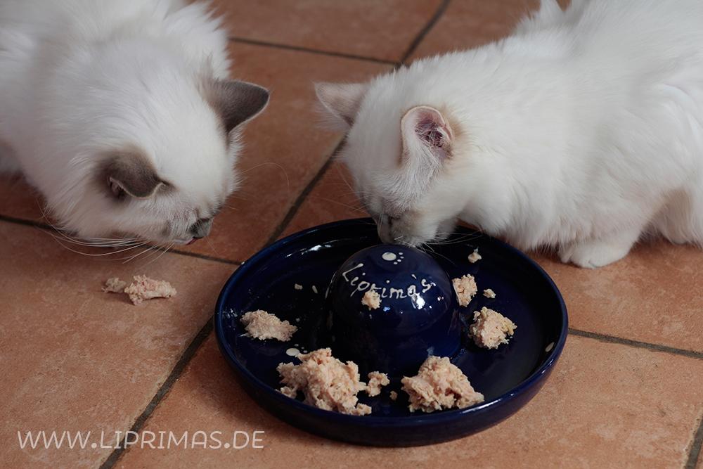 Kittys_Schmankerl_4