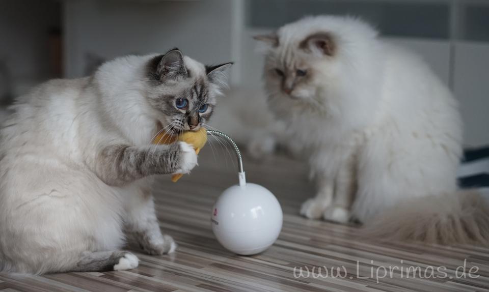 Spielzeug_Lilly