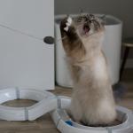 kätts – nur Mäuse machen mehr Spaß
