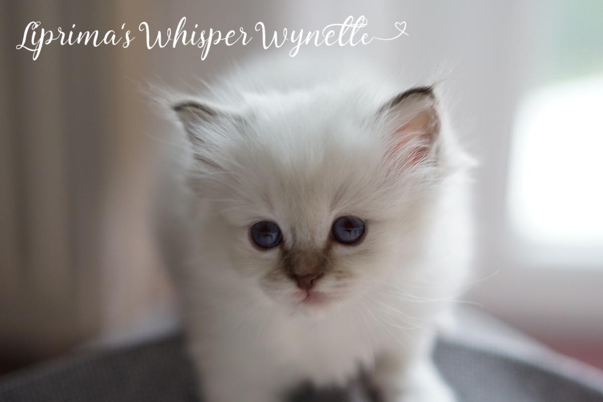wynette_5_wochen_3