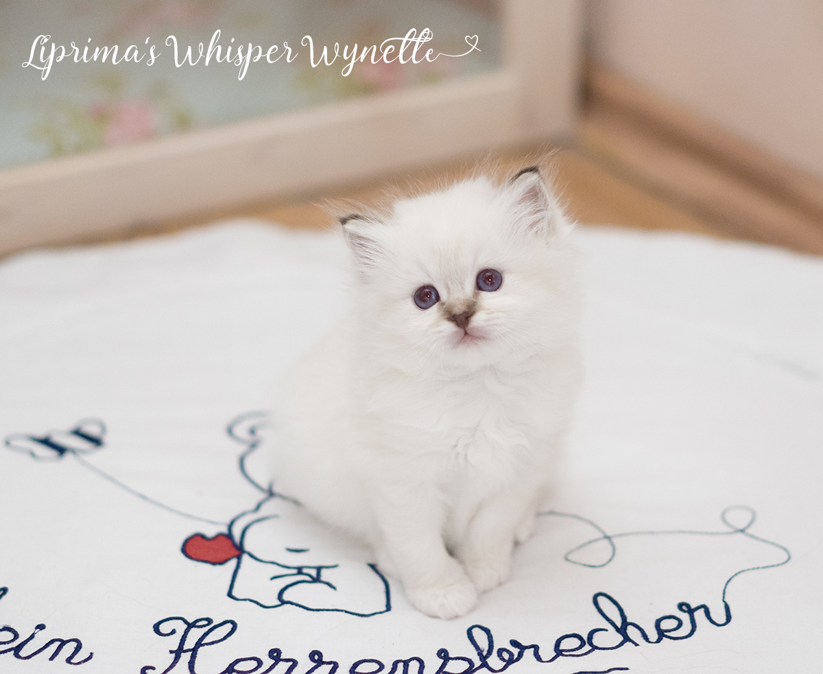 wynette_5_wochen_6