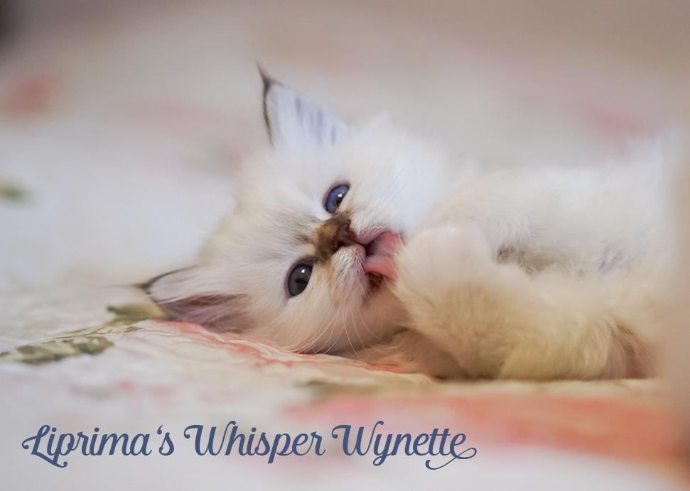 wynette_6_5_wochen_6