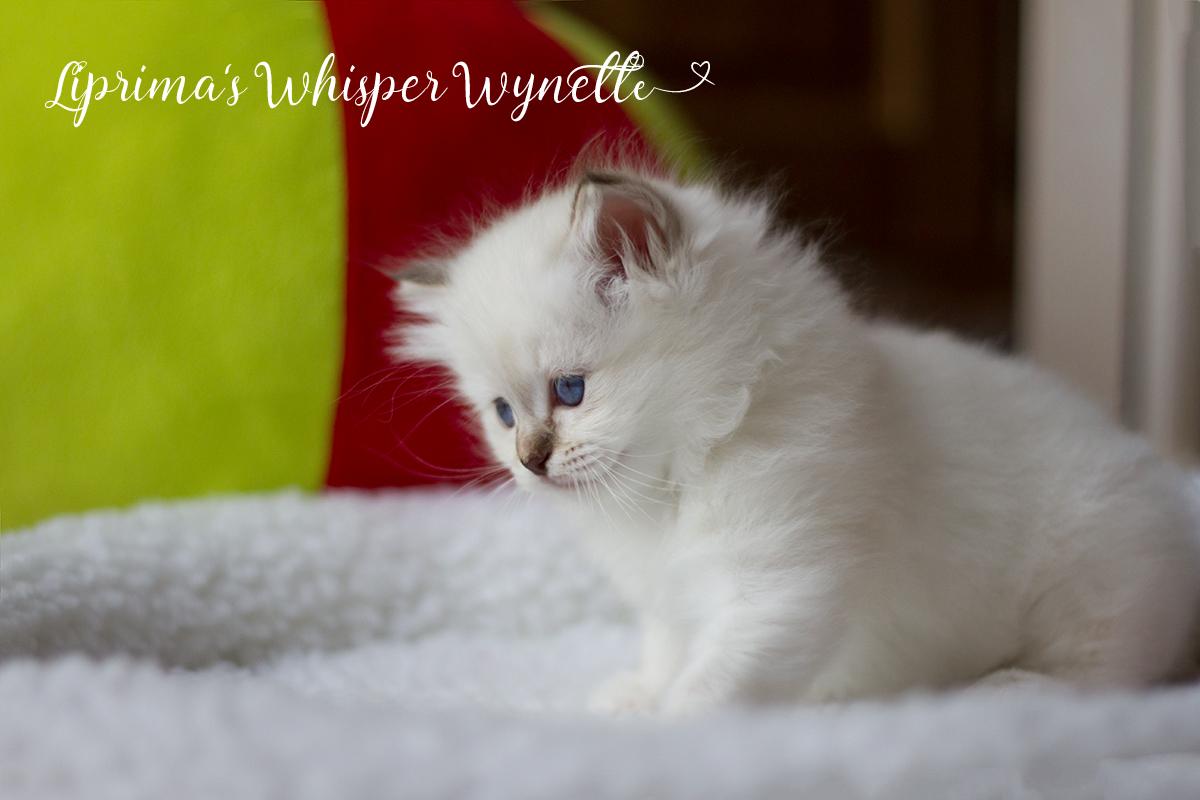 wynette_6_wochen_001
