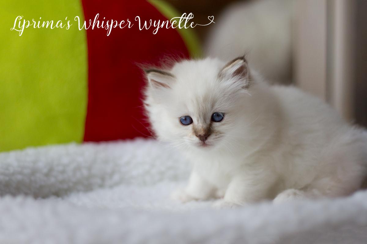 wynette_6_wochen_002