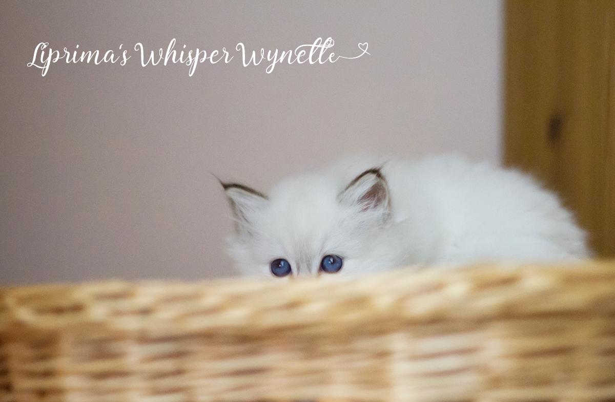 wynette_6_wochen_011