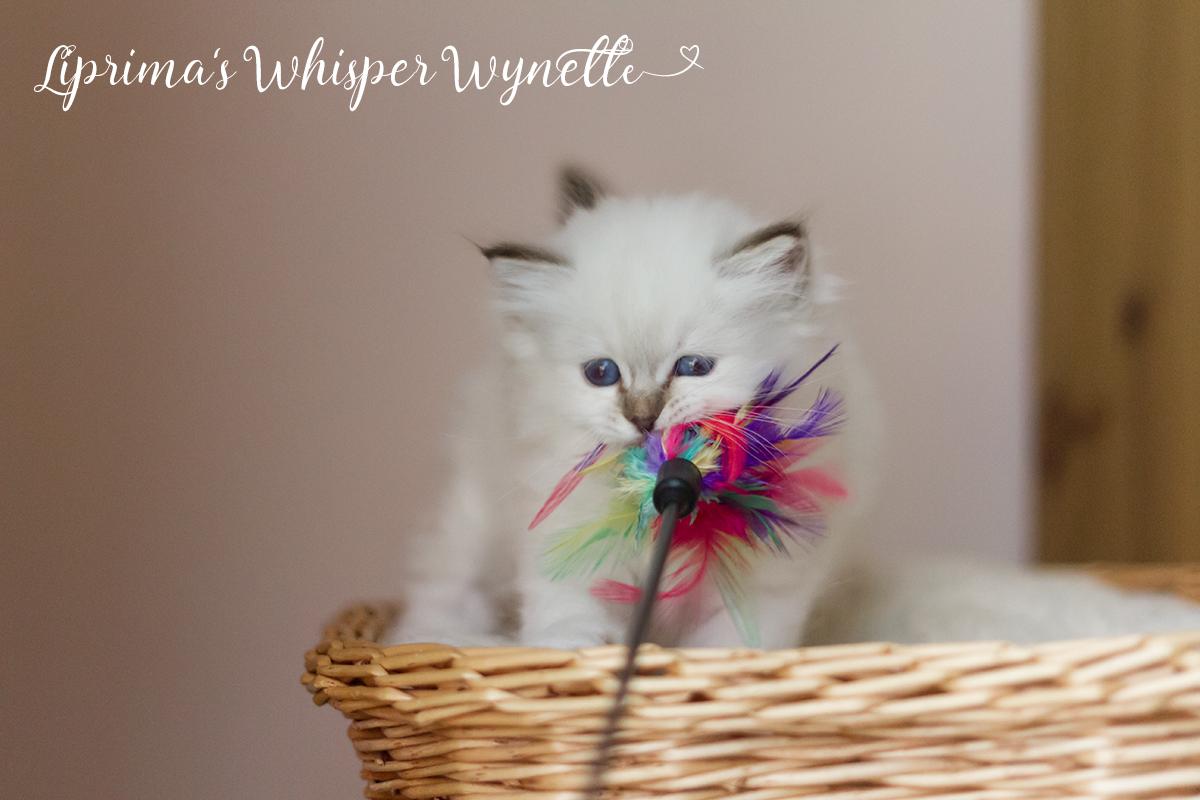 wynette_6_wochen_1
