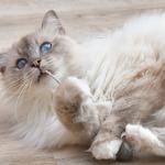 Kätts Katzenspielzeug